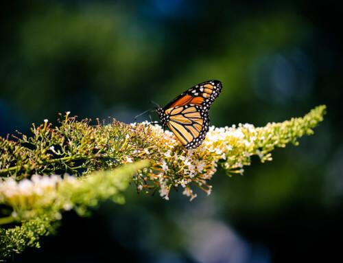 Dentro un Bosco in mezzo a Milioni di farfalle
