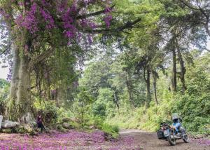 Attraversando il guatemala in moto durante una tempesta di fiori
