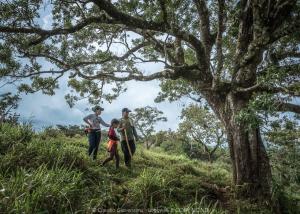 Un meraviglioso albero in Panamà e una famiglia