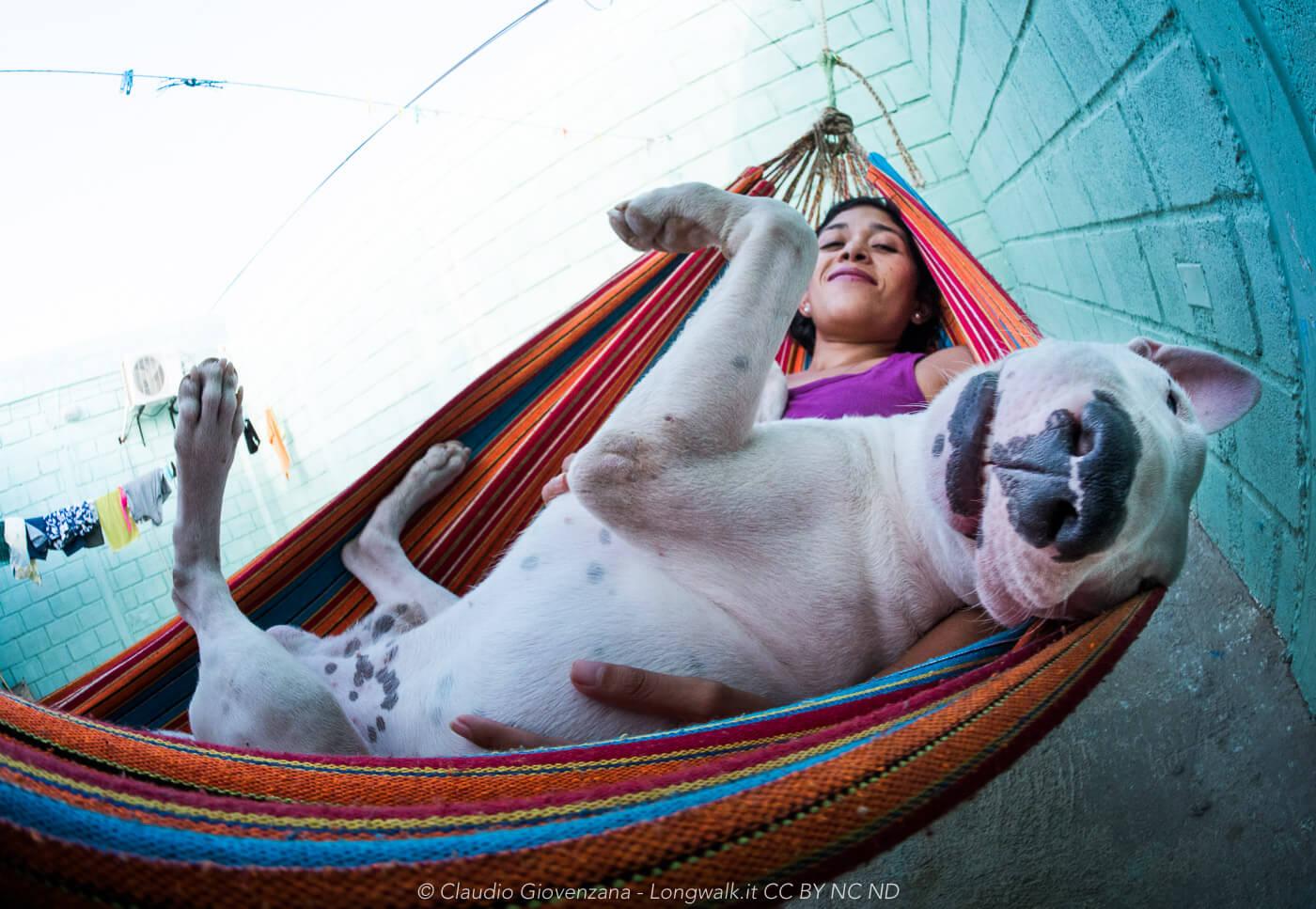 Foto di un bull-terrier sull'amaca con una ragazza