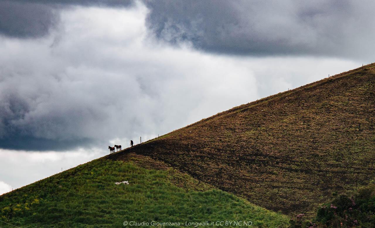 Un uomo con i cavalli scende da una collina