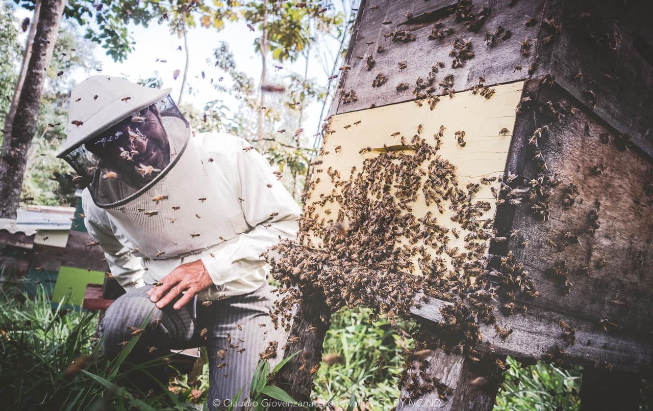 Bee keeper un apicultore