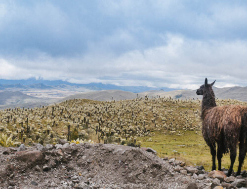 Ecuador e la porta delle Ande.