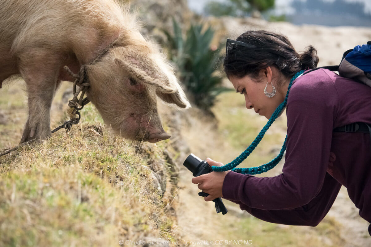 Olga che immortala un curiosissimo porco