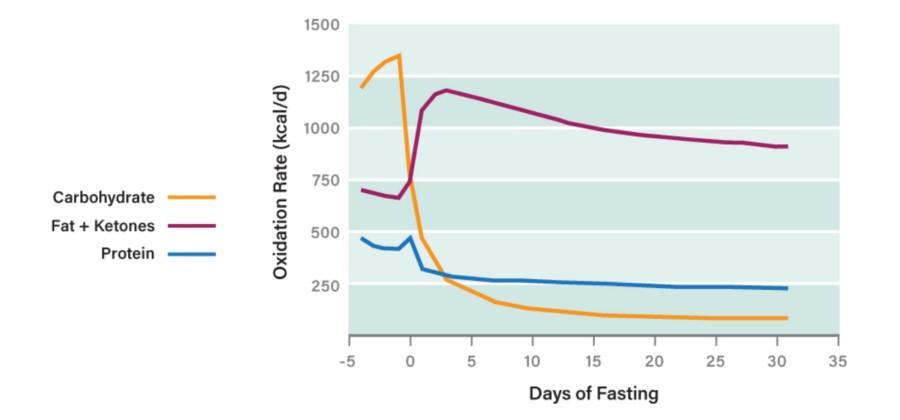 Consumo di proteine, carboidrati e grassi durante il Digiuno Intermittente